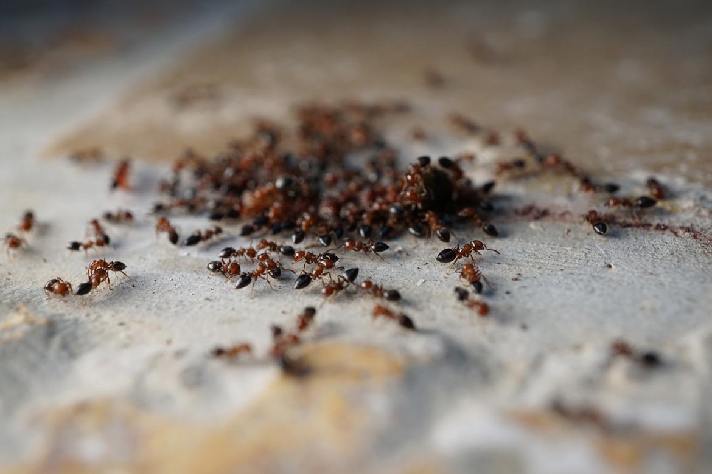 Ameisen im Haus? | Verbraucherzentrale Hamburg